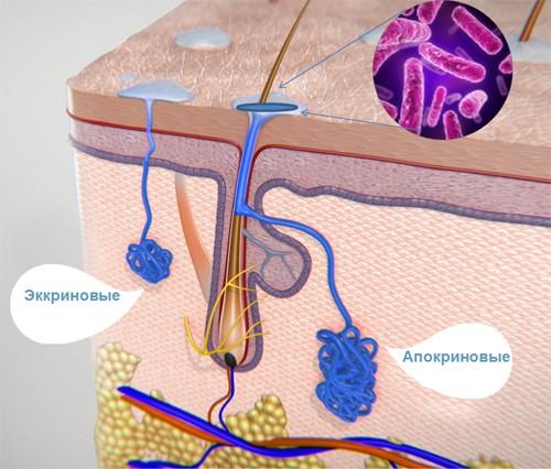 Осмидроз – причины, симптомы, диагностика и лечение